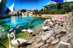 L'Oceanografic - part of the city of arts and science, valencia Simpson Bay, Corfu, Alicante, Travel Tips, Spain, Science, Places, Aquariums