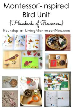 Long list of all the Montessori-inspired unit studies & holiday/seasonal posts at Living Montessori Now; perfect for multiple ages in the classroom or home - Living Montessori Now Montessori Preschool, Preschool At Home, Preschool Themes, Kindergarten Activities, Preschool Education, Early Education, Toddler School, School Play, Bird Theme