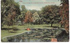 Lily Pond, Riverside Park, Wichita Kansas postmarked 1911