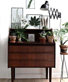växter i ramar