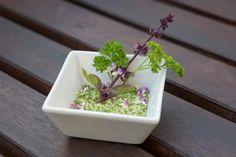 Frische Kräuter trocknen - Tipps & Tricks @ diybook.at Kraut, Tricks, Homemade, Plants, Drying Herbs, Fresh, Home Made, Plant, Hand Made