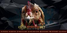 Pada artikel kali ini StationBet.Biz selaku Agen Sabung Ayam S128 Resmi akan membahas mengenai Tanaman Bernutrisi Tinggi Untuk Sabung Ayam S128.