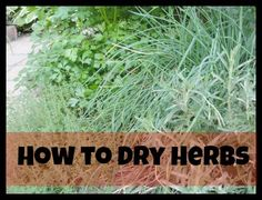 How to dry herbs - easy step by step guide