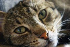 Cats snout 2