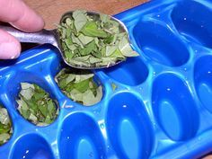Just add fresh herbs and water or olive oil in ice cube trays.  Freeze.  Put in freezer bags for fresh herbs all year round.  I make my favorite recipe of pesto with the large crop of basil I have this year and spoon the pesto in the cube trays.  works great!