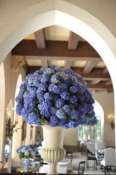 Hydrangeas in a big urn