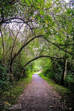A natural forest tree archway on the beautiful Vedder Rotary Trail (Chilliwack, BC) by Funky Junky Interiors cr.c.