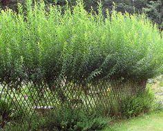Ideas For A Garden Fence Design - Uncinetto Wattle Fence, Garden Fencing, Farm Gardens, Outdoor Gardens, Living Willow Fence, Garden Living, Ponds Backyard, Fence Design, Garden Structures