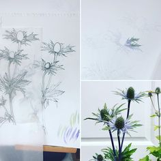 Reposting @piecesofnaturebyanna: I maybe sometime with this sea holly!! #seaholly #eryngium #botanicalart #botanical #botanicalillustration #flowers #nature #watercolor #watercolour #art #painting #sketch #trace #workinprogress #annadowdart