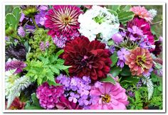 best-flowers-for-august-wedding.jpg (683×470)