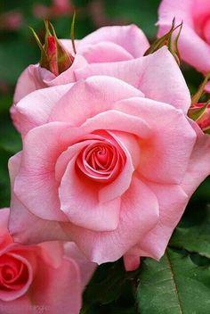 Mother Nature,s loving flower.