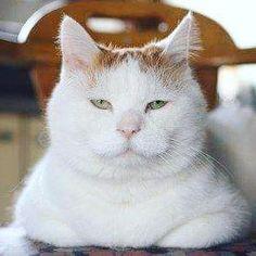 Shironeko's serene gaze reflects great tolerance of human foibles.