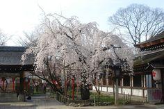 Hirano Shrine Kyoto