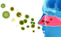Nasennebenhöhlenentzündungen lassen sich mit einfachen Hausmitteln lindern und mit einer speziellen Ernährungsweise vorbeugen.(Sinusitis) oder auch Stirnhöhlenentzündungen lassen sich mit einfachen Hausmitteln lindern und mit einer speziellen Ernährungswe