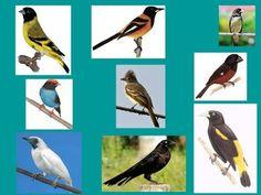 Canto dos pássaros 2 - Fauna Brasileira (Campo e Mato) - YouTube