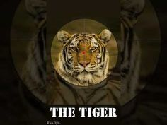 Save TIGER Save PLANET Save Tree Save Earth, Save The Planet, Planets, In This Moment, Make It Yourself, Fictional Characters, Fantasy Characters