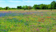 Wildflower Paradise Panorama Lynn Bauer