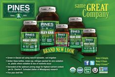 Wheat Grass, Where to Buy Wheatgrass | Pines Wheat Grass