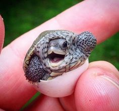 20 Best Funny Animal Photos for Sunday Morning - Cute - animals Funny Animal Photos, Baby Animals Pictures, Cute Animal Pictures, Animals Images, Animal Pics, Pictures Of Turtles, Baby Animals Super Cute, Cute Little Animals, Cute Funny Animals