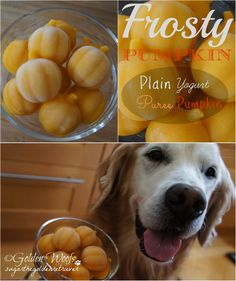 DIY Pets : 20 Homemade Dog Treat Recipes Plain Yorgurt Puree Pumpkin Dog Treats Sharing is caring, don't forget to share ! Puppy Treats, Diy Dog Treats, Homemade Dog Treats, Dog Treat Recipes, Healthy Dog Treats, Dog Food Recipes, Dog Training Methods, Basic Dog Training, Training Dogs