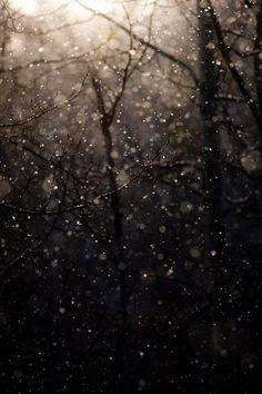 Pluie dans les bois