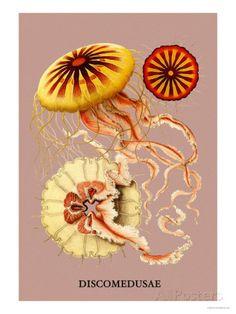 Jellyfish: Discomedusae Lámina por Ernst Haeckel en AllPosters.es