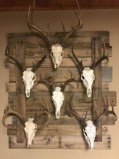 The 25 best European mounts deer.