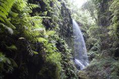 Los Tilos Forest - #LasPalmas