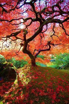 Japanese Gardens, Portland, Oregon backyardsclick.blogspot.com