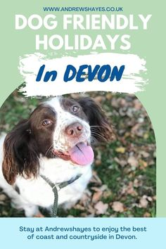Devon is a great destination to take your dog on holiday, there are plenty of nearby walks, attractions and beaches close to Andrewshayes Holiday park in Devon. Devon Holidays, Dog Friendly Holidays, Holiday Park, Health And Safety, Dog Walking, Dog Friends, Caravan, Walks, Touring