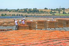 Agriblea Sun dried tomatoes in Ispica, Sicily Sicily Travel, Sun Dried, Nature, Dried Tomatoes, Island, Block Island, The Great Outdoors, Islands, Mother Nature