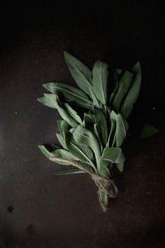 Sage | colorinspiration: plantenkunde