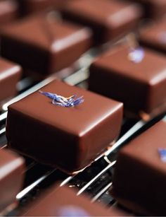 Bonbons. David Fabrice.