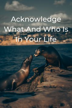 Acknowledge What And Who Is In Your Life | by Gregory Reece-Smith | ILLUMINATION | Aug, 2020 | Medium