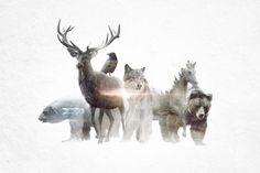 Endangered Animals Gifs Said Dagdeviren