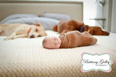 Newborn Baby and Dog | Akron Ohio Newborn Photographer | Brittany Gidley Photography LLC