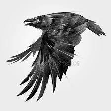 Výsledek obrázku pro vrána kreslená