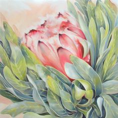 Protea found in the Western Cape, South Africa. 'Fledgling' Oil on canvas 60cm x60cm The third of a set of three Protea laurifolia #Protea#Painting#Western Cape