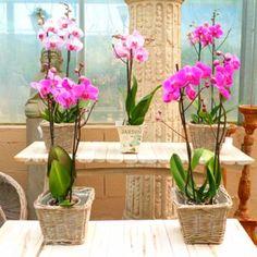 Tipos de macetas para el cultivo de Orquídeas - Ideas para jardines y decoración