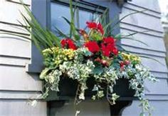 window boxes - Bing Images