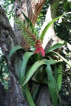 Plant life - Epiphyte Epiphyte, Mexico Travel, Plants, Life, Houses, Plant, Planets