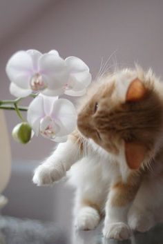 Orchid Kitty