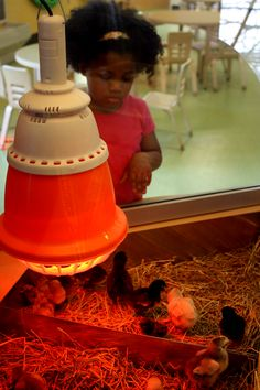 Watch as baby chicks hatch right in front of you at KidZooU!