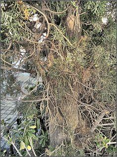 Árbol en un parque de Aldaya (Valencia)