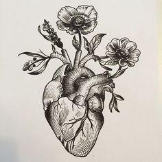 I like this ** anatomical coronary heart woodcut - Google Search...