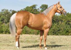 Palomino with silver Andalusian Horse, Friesian Horse, Arabian Horses, Palamino Horse, Most Beautiful Horses, All The Pretty Horses, Animals Beautiful, Palomino, Horse Photos