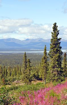 Alaska is a place many of us are dreaming of visiting. I got to spend a couple of weeks here, for business, but also got to discover the many beauties The Last Frontier has to offer. Visit the link to see my life in Alaska in photos!