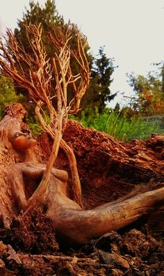 Sleeping Spring Underground Tree Woman Driftwood by ShapingSpirit, $450.00