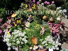 Love the use of Sweet Alyssum in this fairy garden - it's the perfect size and smells wonderful too! via Ilona's Garden