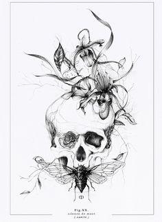 tête de mort cabinet de curiosite végétation insecte botanique gravure dessin illustration artiste